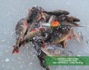 Бесплатная рыбалка на Малеевском Пруду (Кашира, Подмосковье)
